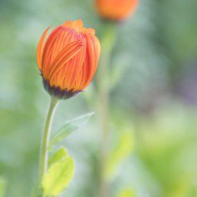 01 D50_8510 Orange