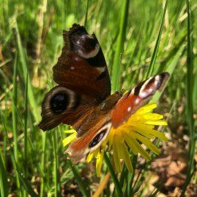GJ3-Butterfly_8463-01
