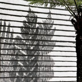 3 Hermon D_Tree Fern Brisbane_MP Shadow_Apr 20