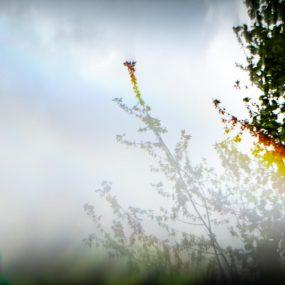 02-Bob Day_Garden Refracted #2
